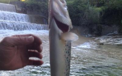 Fishing creek/lake